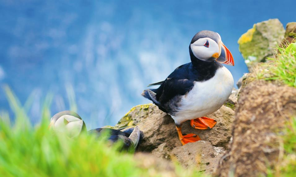 Visit puffin colonies along the island's coasts.